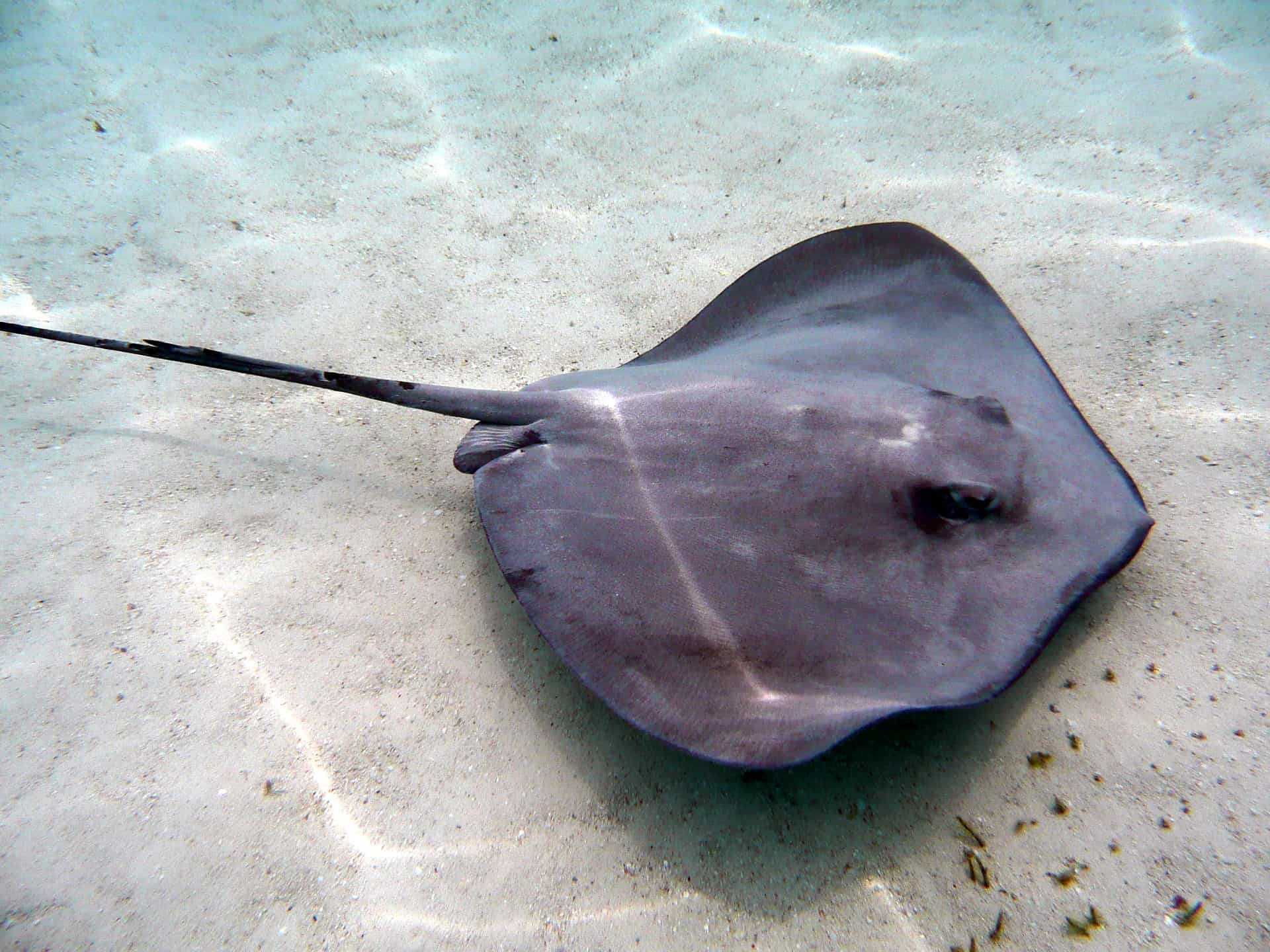 St John's, Antigua Stingray City
